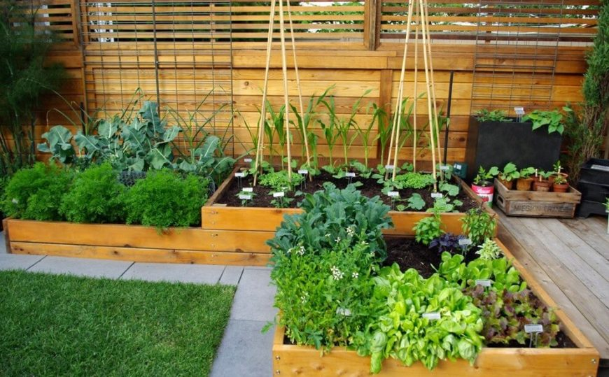 this vegetable garden is built in an l shape in raised beds taking advantage