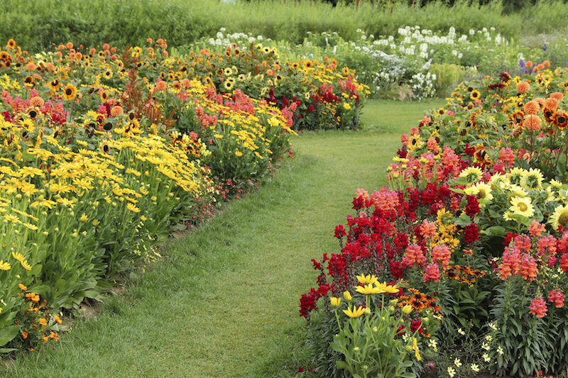 Rows upon rows of daisies and cone-shaped flowers in salmon and red.