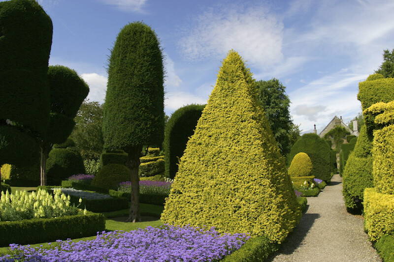 This pyramid shaped topiary stands out amongst the many different shaped topiary in this garden.