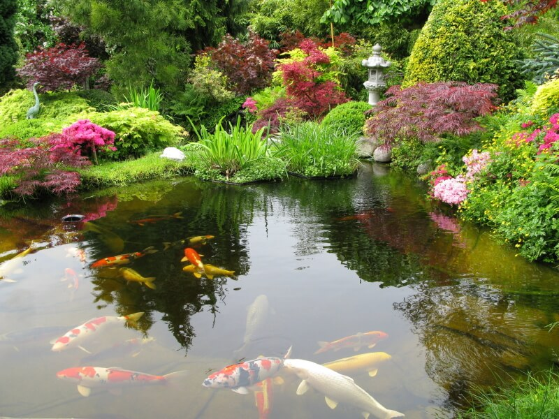 Koi ponds are popular in Japanese gardens. This one features Japanese maples amongst a host of water-loving grasses and a single stone lantern.