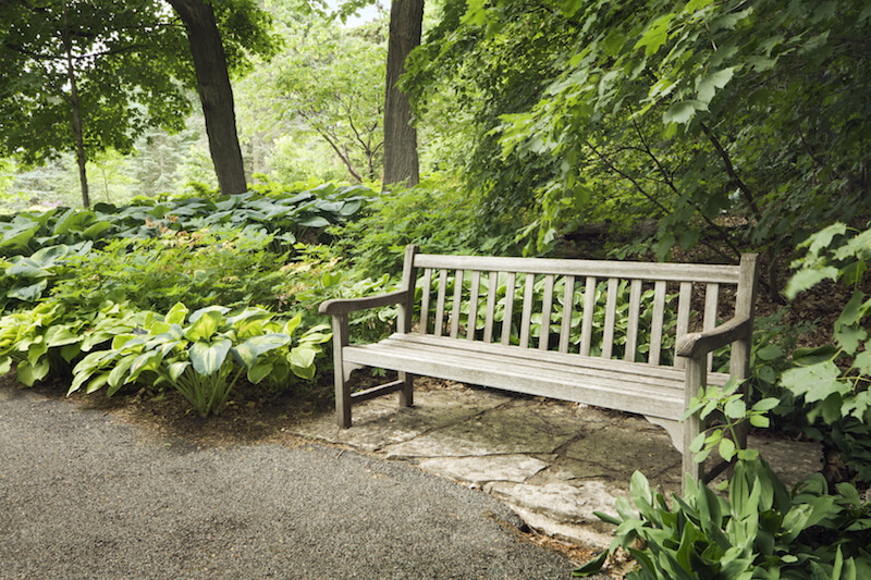 A simple wooden bench tucked just off the pathway into the trees and thick plants.