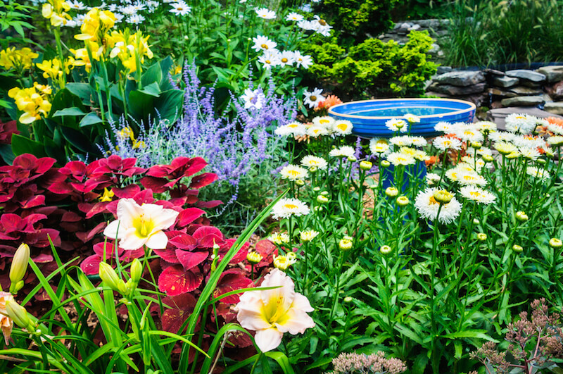 This bright blue ceramic bird bath is tucked into a thick field of flowers, including daisies, daylilies, and lavender.