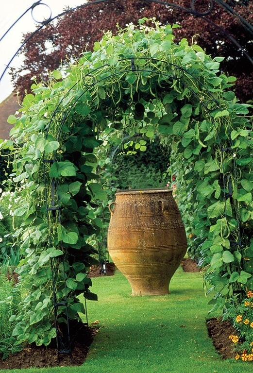 Training your vines to grow over an arbor can create an incredible shaded arch effect.