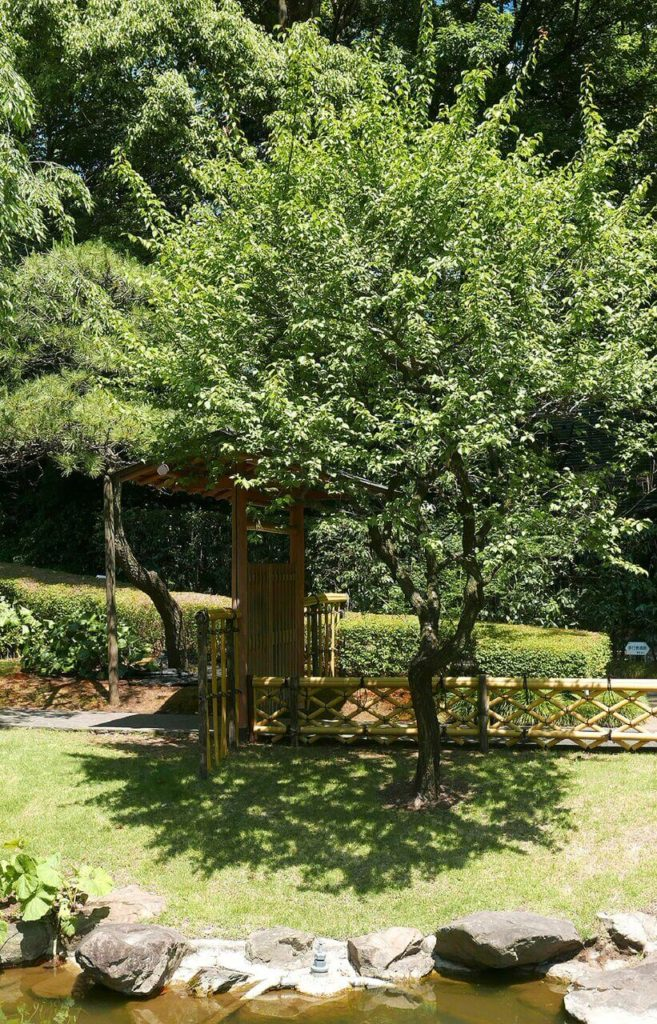 "This is a gate arbor in a distinctly Asian style that provides entry into a Japanese Zen garden. An arched ""roof"" is shaded by lush trees."