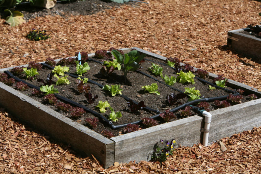 here is a simple raised garden bed with an irrigation system in place these kinds