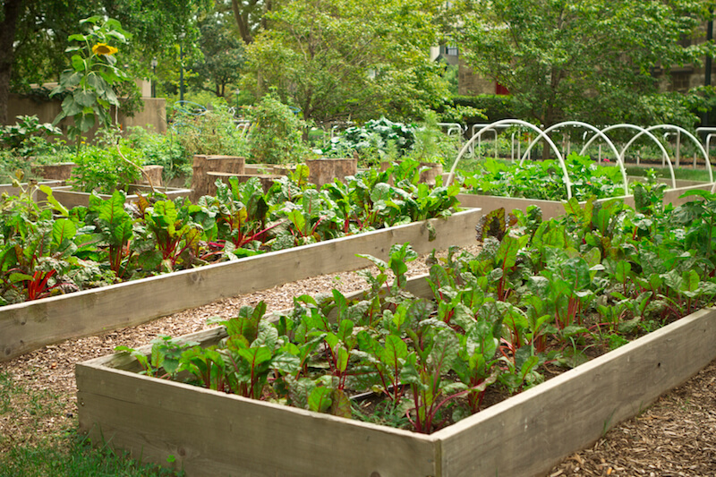 Vegetable Garden Ideas Part - 26: Here Are Some Raised Garden Beds, With A Rustic Appeal And Some Irrigation  Systems.