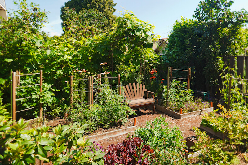 here is a lovely vegetable garden with a seat for resting after a long day tending - Flower And Vegetable Garden Ideas