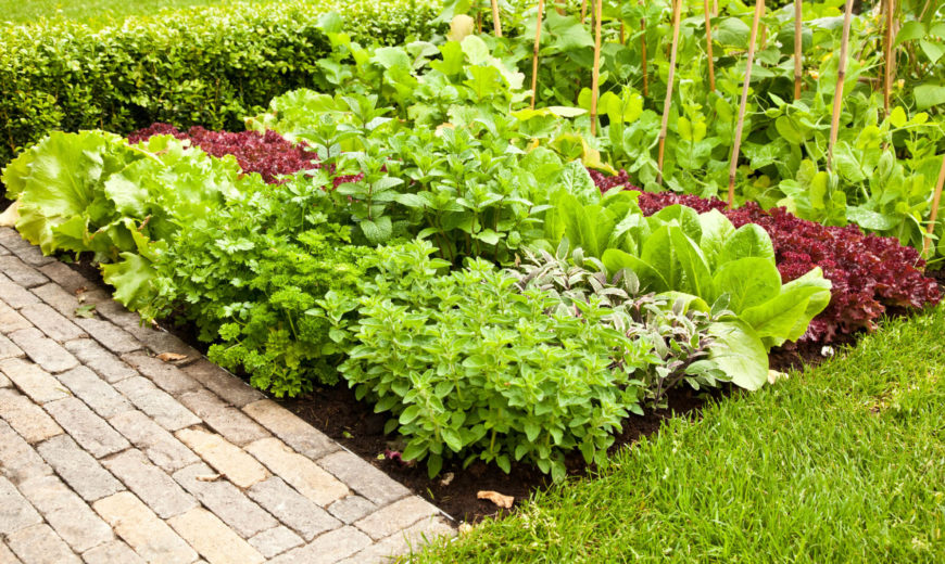 Garden Ideas Vegetable Part - 41: Here Is A Small Plot Off Of The Path That Was Converted Into A Fantastic  Small