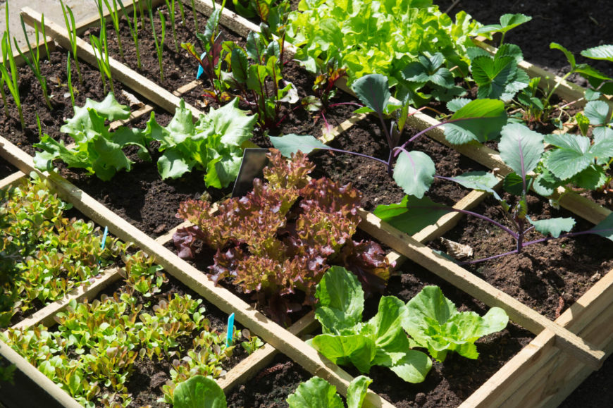 here is a single box with a variable mix of vegetables organized by dividers - Vegetable Garden Ideas For Spring
