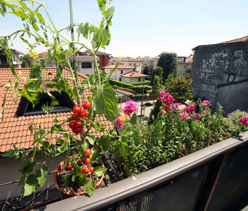 Hanging planters from railings is a way to have a small personal garden in an urban area. In the picture above, there is a lovely small vegetable and flower garden hanging above the city. It is not impossible to grow your own produce, even if it seems like you have no space. There are always creative ways.
