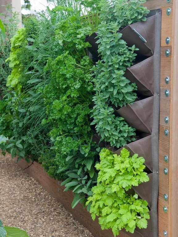 Here is a simple and clever solution for growing small vegetable plants. A hanging garden like this is perfect for those with less space in the yard for raised garden beds, and greenhouses.