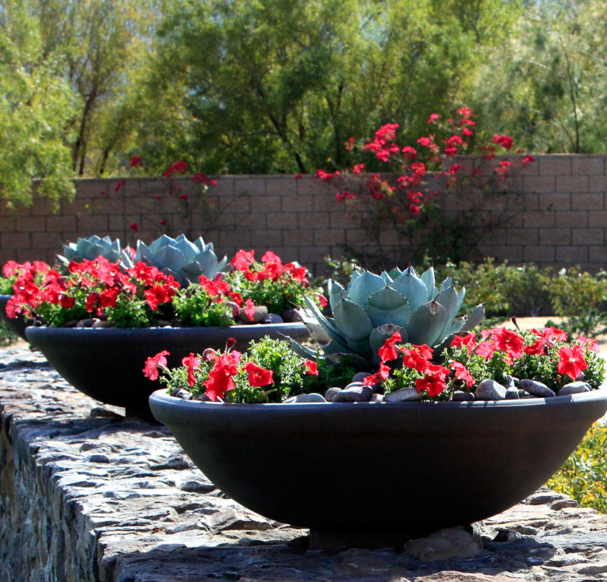 Some cacti have a nice blooming look that makes them amazing for a  centerpiece of an