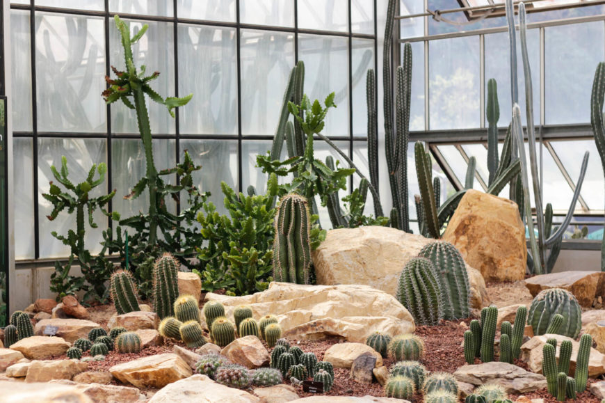Perfect With A Few Well Placed Boulders You Can Really Build That Desert Look With  Your Cactus