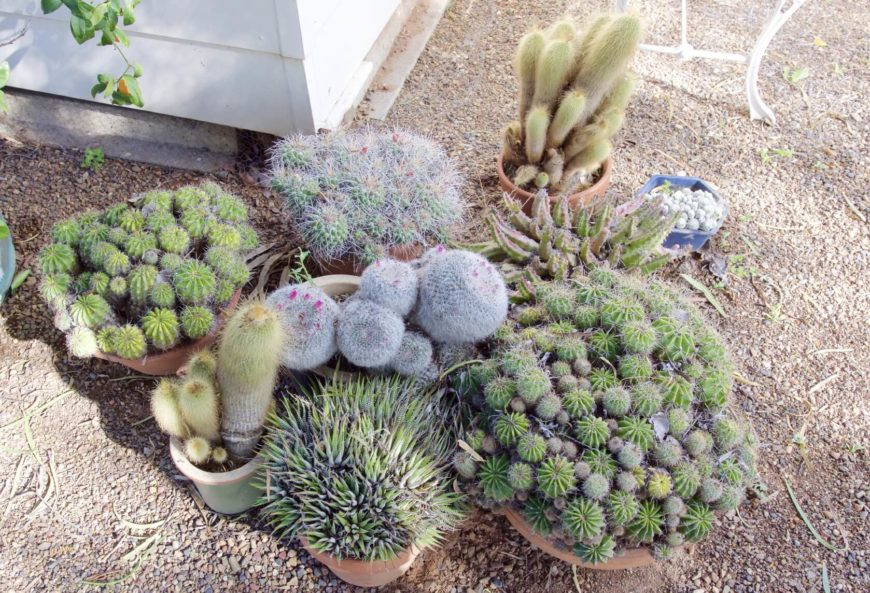With so many different kinds of cactus, you can mix, match styles and looks, and give your cactus garden a truly unique look. With a cactus garden you can really show your personality.