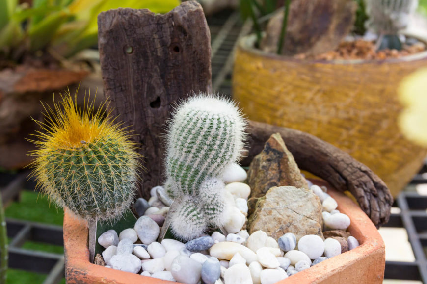 Even small cacti can add features to your garden. A small cactus is super cute, and adds character to your garden and landscaping.