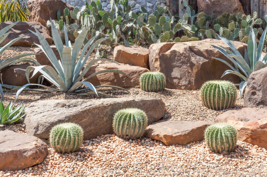 If you have a large number of cacti creating a cacti forest, or just a few well placed plants in a stone garden, you can easily build that desert look. There is no need to overload a space with cacti, in fact some times, less can be more.