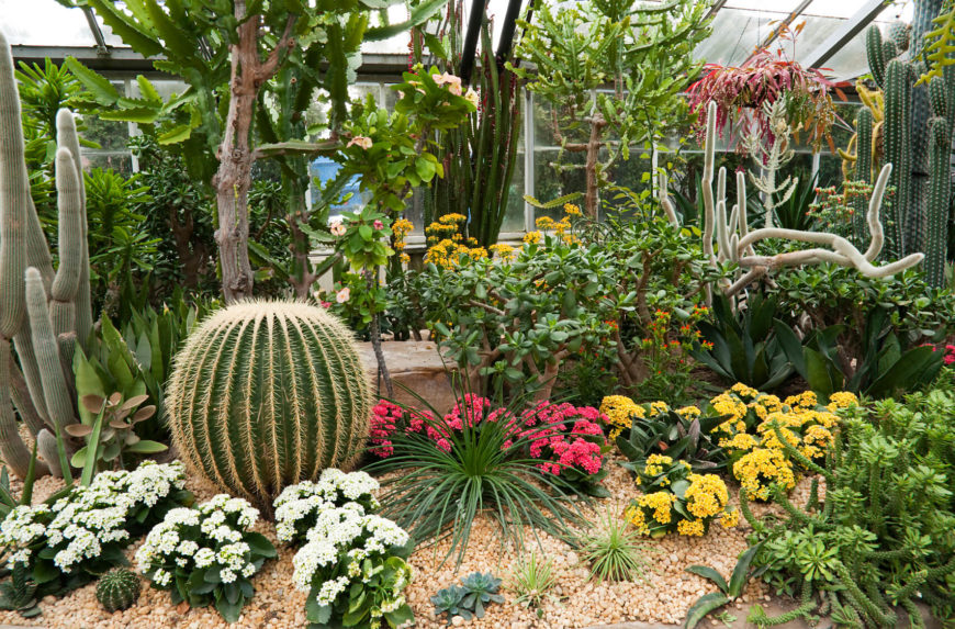 Cactus Garden Ideas cactus garden designs the great cactus garden ideas home design ideas best decor The Contrast Of A Cactus Against Other Flowers Makes For An Interesting And Full Dynamic With