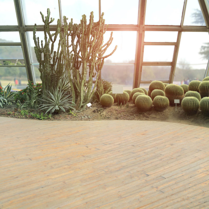 Nothing has that old fashioned appeal like the sun shining through a tall set of cacti. The cactus look is perfectly paired with stone as well as unfinished, natural tone wood and anything dusty and rugged.