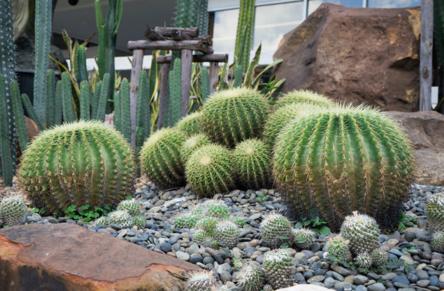Captivating You Can Use Different Kinds Of Stones And Dirt In A Cactus Garden Which  Gives A
