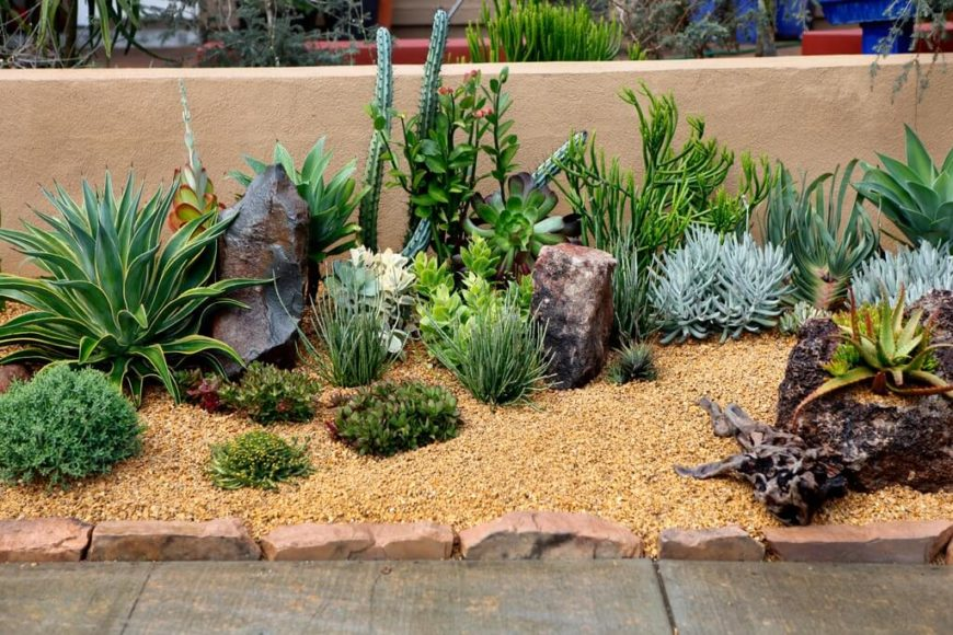 Cactus Garden Ideas cactus garden ideas Here Is A Small Collection Of Various Cacti There Are So Many Different Kinds Of