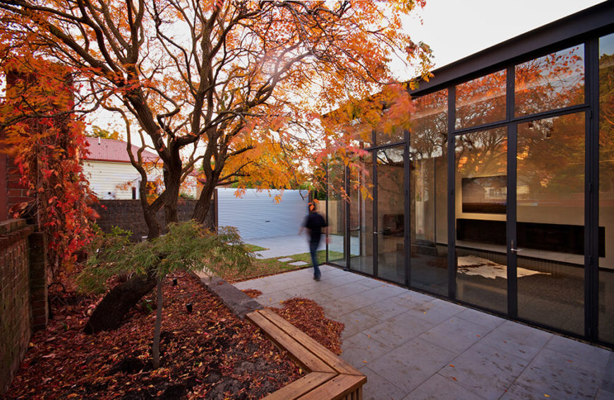 "Here's that ""Golden Rain"" tree, visible from anywhere in the home addition, thanks to the full height glass walls. This close interaction with the outdoors was part of the design from the ground up."