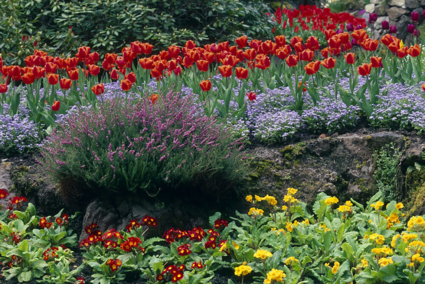 here is a lovely perennial garden with many different layers this garden mixes tulips