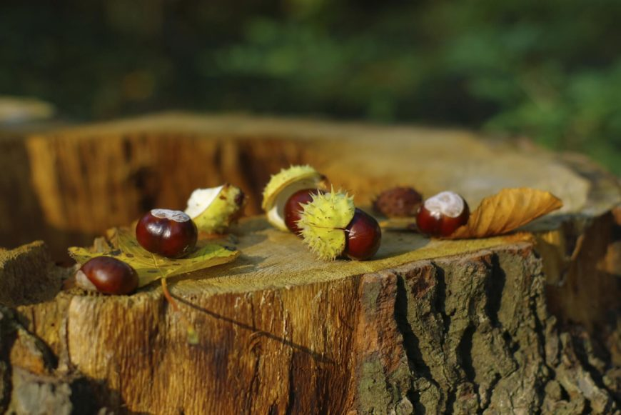 Because the scent is kept inside the nut, you may want to consider poking holes in the nut or splitting it in half to better release the odor. Perfectly fine for human noses and perfectly acceptable as a scent, the nut is particularly noxious to spiders.