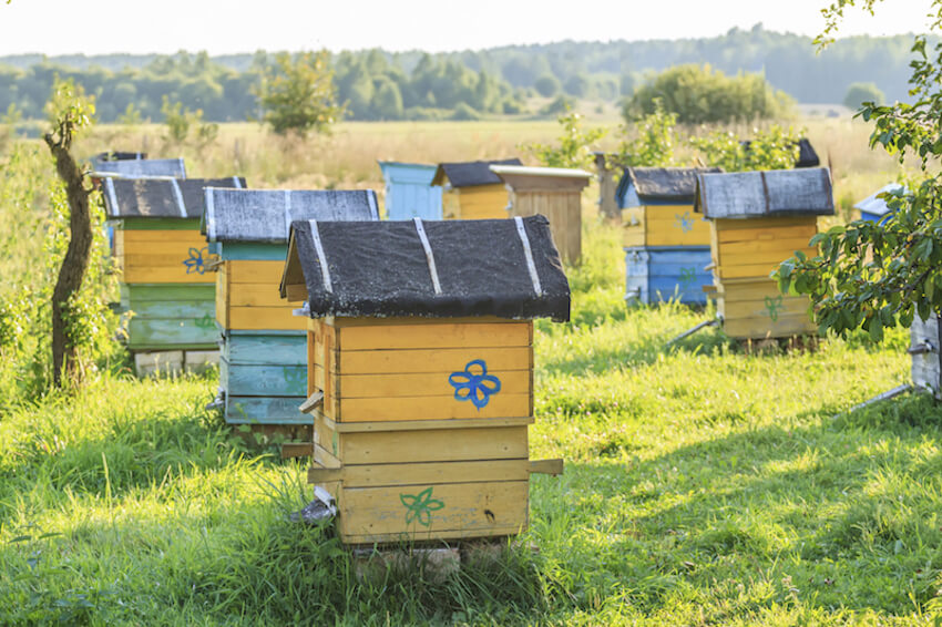 29 beautiful backyard bee hives home stratosphere for Hive homes