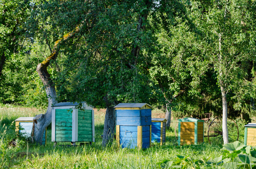 If you've got a sprawling backyard, or even a small grove of fruit trees, a setup like this can be ideal. The varying colors helps the houses stand out amidst the greenery, and the large size takes advantage of the ample space.
