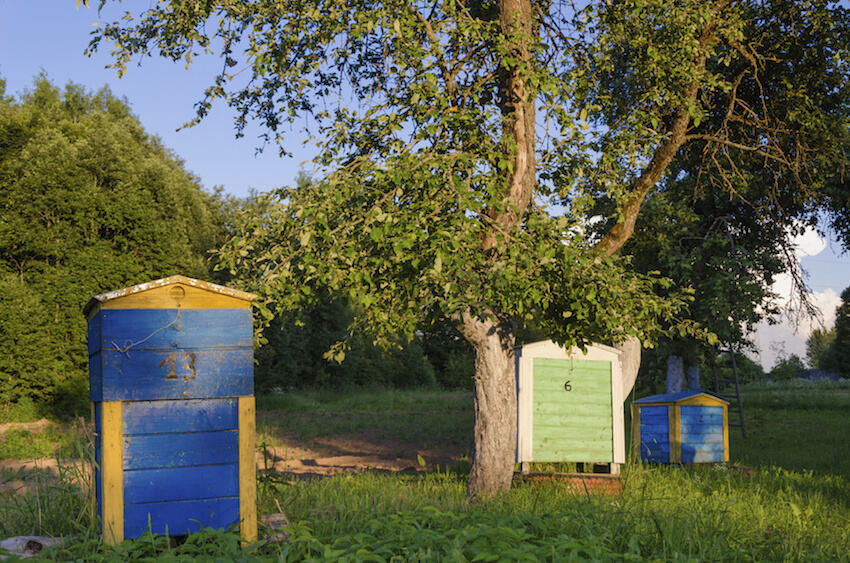 Here's another set of relatively large beehive boxes, standing as a great example of what can be done in a properly sized yard. The large doors and lift-off lids make for easy access, while the bright colors help them stand out.