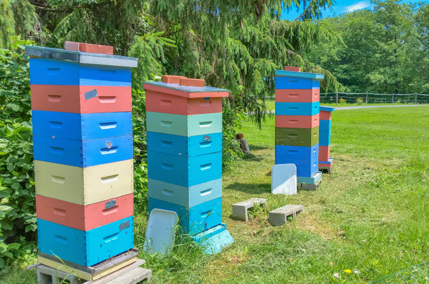 These colorful file cabinet-like designs are a great modular idea for your growing apiary operation. The individual drawer components can be added and stacked as your hives grow, while offering convenient access for observation and honey harvesting.