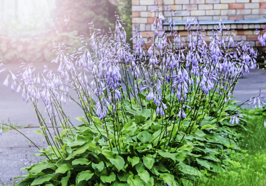 Plant gardens do not have to be large or massive to make an impression. A small patch of interesting plants can be perfect to punctuate a lawn or walkway.
