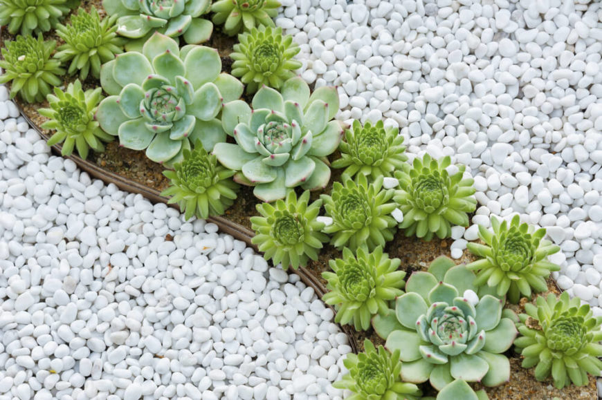 With small controlled plants, your garden can have a very specific design. Here are a few plants used to build a cool and fun design within a rock garden.