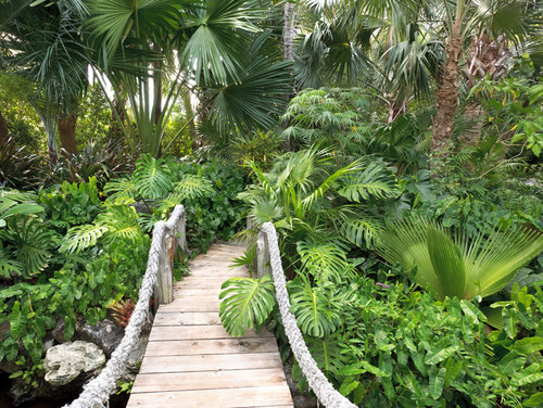 Here is a garden with a wide variety of plants that have grown wild, resembling a jungle. With a garden like this you would feel as if you are lost in the wild.