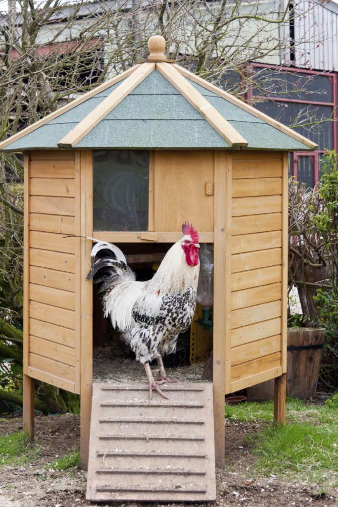 We love the clean lines and sharp details on this octagonal chicken coop. Perfect if you've only got a couple birds, it can stand as a handsome appearance in almost any sized yard.