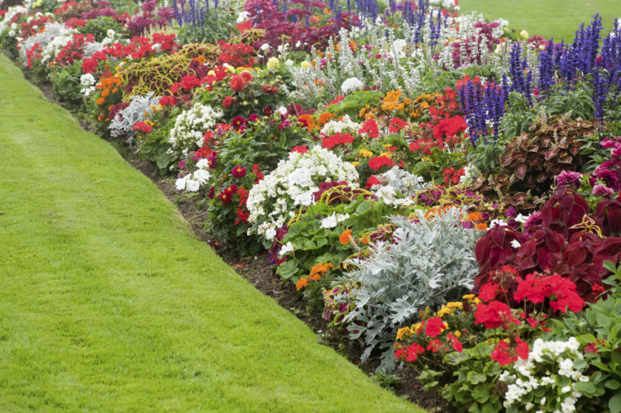 Small flowering bushes can be gathered in tight groupings to create a bloom of color that is dynamic and intriguing. A long line of clustered flowers can make your large garden feel very full and vibrant.