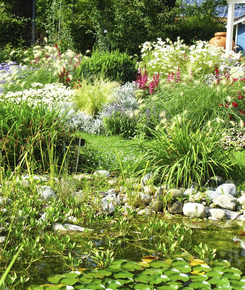 When you have a water feature such as a pond you can get plants that are typically found in marsh or swamp areas. This makes your pond seem much more natural.