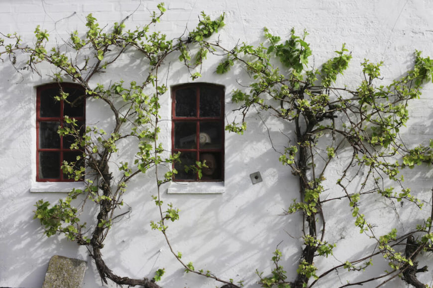 You can use vines to create contrast with your structures. White walls with dark vines crawling up them really makes an impact. It can draw attention and turn heads.