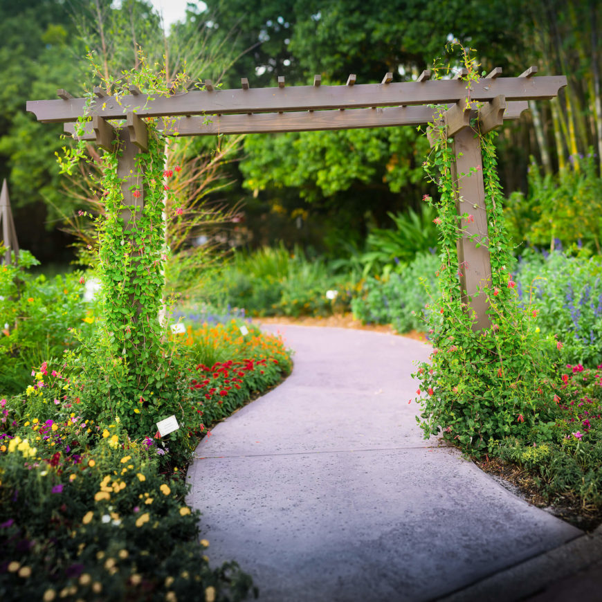 Even if it does not lead to a garden, a vine covered archway is a fantastic feature. You can place them on paths to provide a few more interesting features, making a walk more enjoyable.
