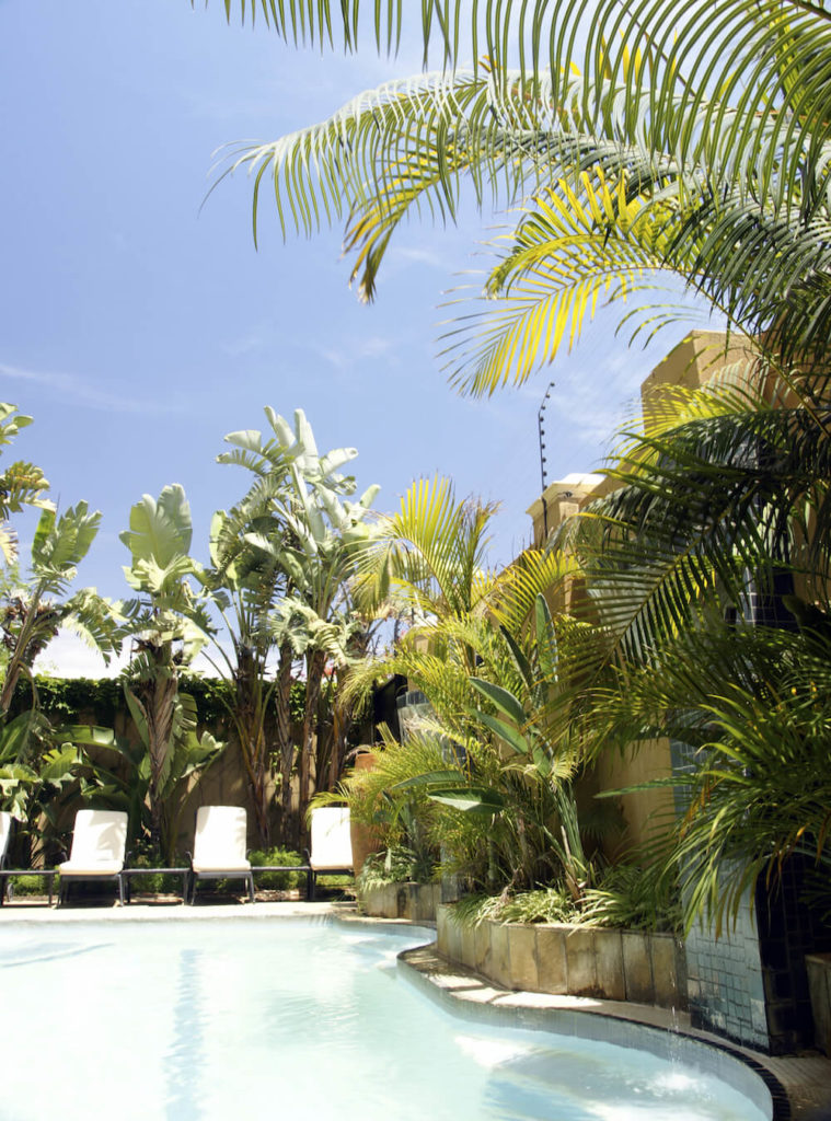 One great thing about palms is that they can pop up over privacy walls, giving your eyeline a nice, dynamic profile to look at while floating in your pool on a warm summer day.