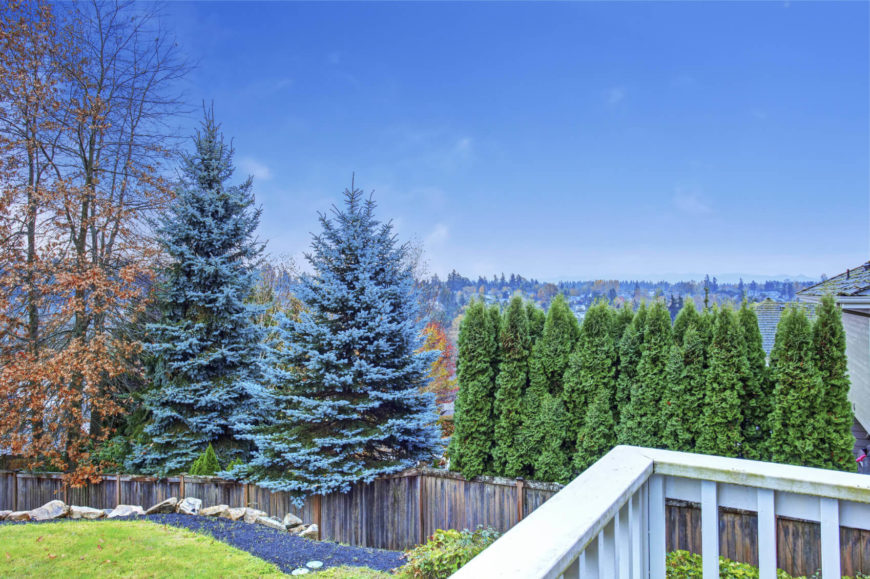There are plenty of interesting and unique trees to choose from. Here is a yard that has two pine trees that are nearly blue in color. These kinds of trees can really separate your yard from the rest of the block.