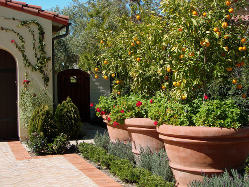 This yard has planters that hold a combination of flowers and fruit trees. Fruit trees pair well with flowers because they can contribute fabulous colors and textures to the garden profile.