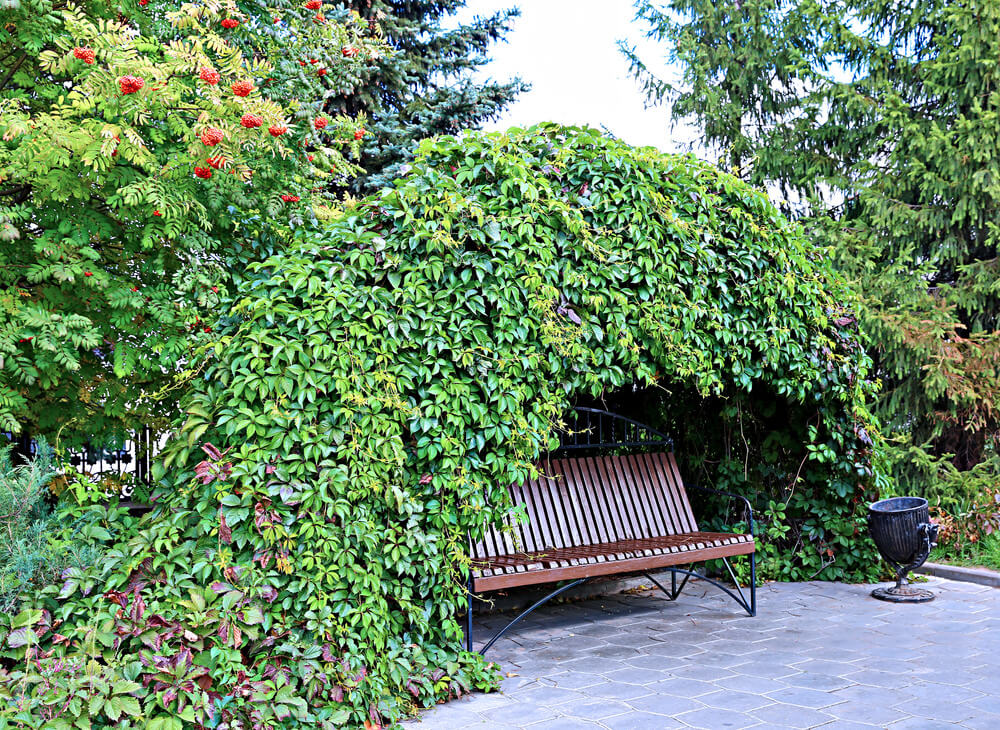 Terrific 60 Garden Bench Ideas Photos Evergreenethics Interior Chair Design Evergreenethicsorg