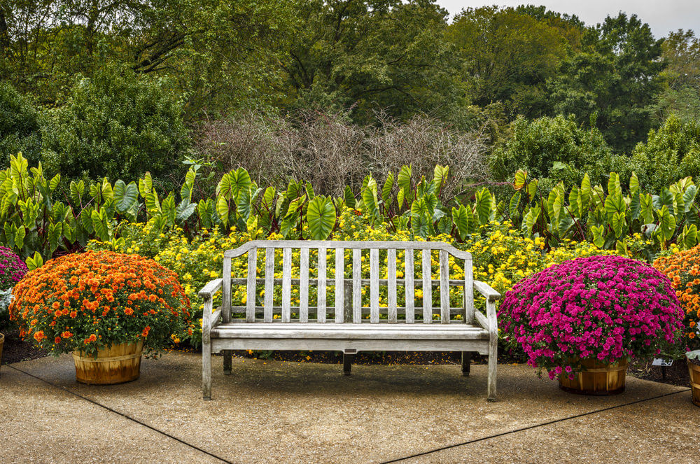 No matter how old benches get, they still look stylish and chic around colorful blossoms.