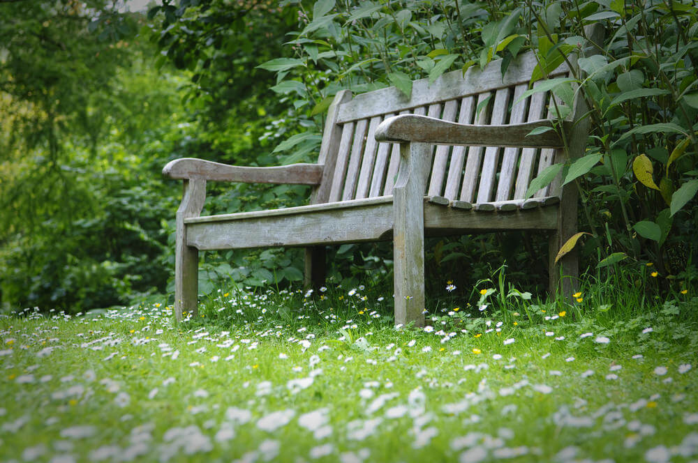 Hiding behind the thick green bushes is a wood bench resting its feet on the dandelion-filled ground.