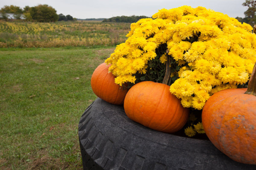 29 Flower Tire Planter Ideas for Your Yard (and Home) - photo#24