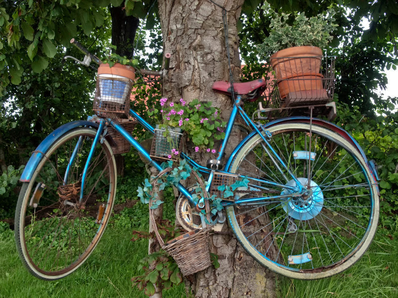 Blue bicycle holding flowers mounted to a tree.