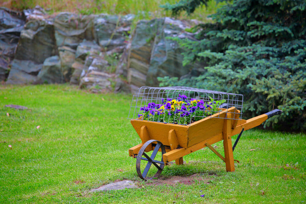Ordinaire Simple Painted Wood Wheelbarrow Planter With Metal Wheel And Wire Cage  Protecting The Flowers.