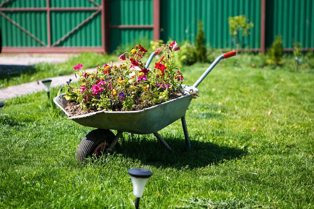 Dilapidated wheelbarrow turned planter.