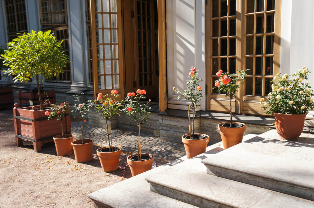 Delightful Example Of A Line Of Small Potted Trees On A Patio.